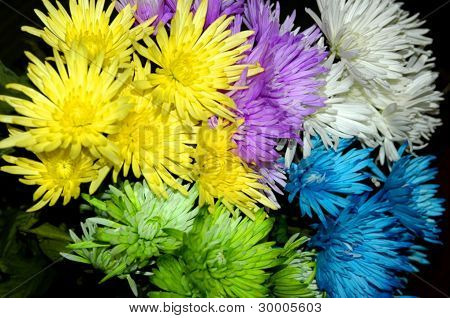 multi-colored flowers