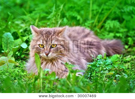 Cat on the green grass