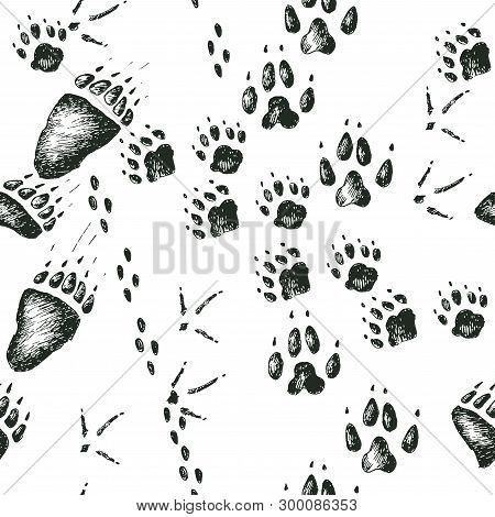 Vector Hand Drawn Seamless Pattern With Walking Wild Wood Animal And Bird Tracks