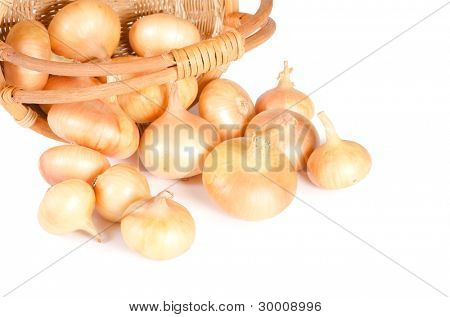 The fresh onions isolated on white background