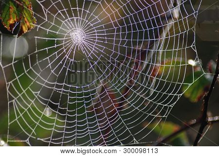 Spider Web; Engineering Work To Observe Carefully