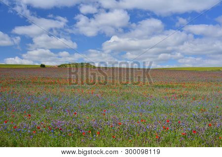 Spring;  Flowers And Poppies In The Fields Of Soria