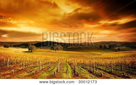 A stunning sunset over an autumn vineyard in South Australia