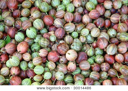 Gooseberries Background