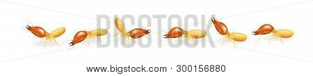 Termites Walking In Line Isolated On White Background, Insect Species Termite Ant Eaten Wood Decay A