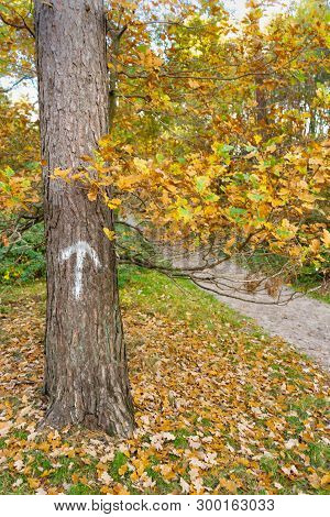 Arrow Painted On Tree Trunk Next To Path In Autumn Forest