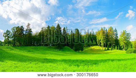 Forest summer landscape - dense forest summer trees in the valley in sunny summer weather, panoramic scene of summer nature