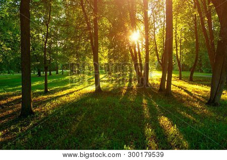 Summer sunset landscape - summer park trees with grass on the foreground and sunlight shining through the trees. Summer park landscape scene