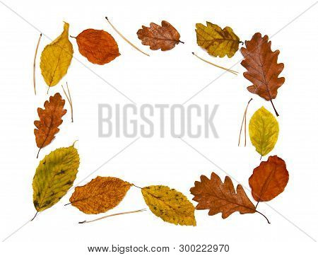 Autumn Frame Isolated On The White Background