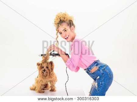 poster of Vet. Pet salon. Petshop. Beauty salon for animals. Dog salon. Grooming. Grooming master making dog hairstyle. Pet grooming. Animal clinic. Dog grooming.