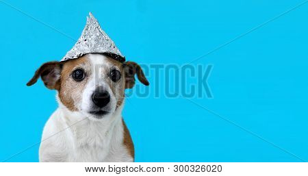 Paranoia Scared Dog In A Foil Hat Sits On A Blue Background
