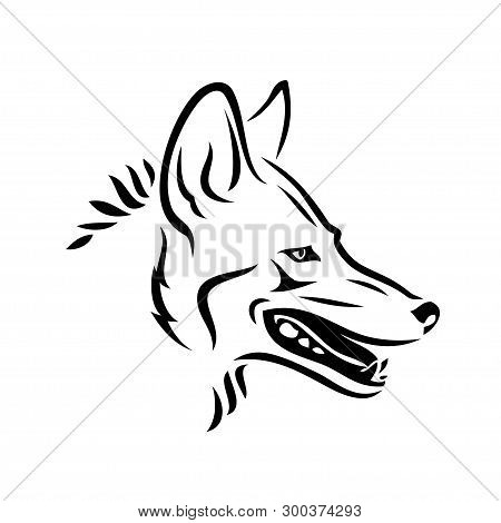 Coyote Animal - Isolated Vector Illustration - Vector