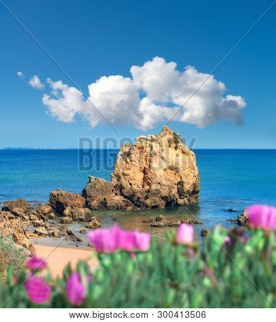 Sandstone Cliffs Near Albufeira, South Portugal. Purple Flowers On The Foreground Are Hottentot Fig