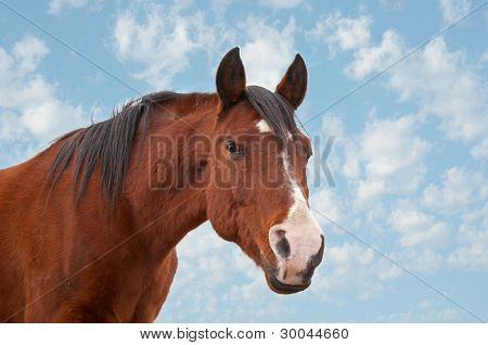 An old Arabian horse against cloudy skies poster