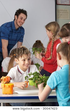 Children learning about plants in school class