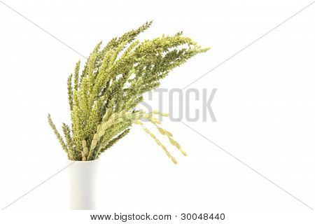 ears of rice and weed