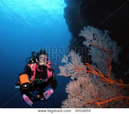 Woman Diver And Sea Fan