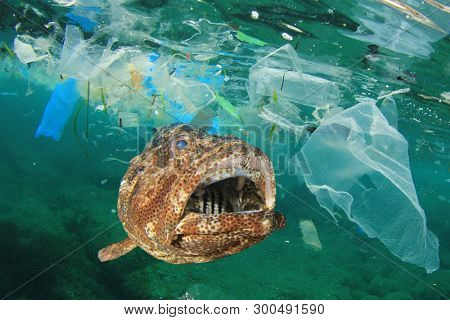 Plastic pollution in ocean and fish. Micro plastics in ocean contaminate seafood