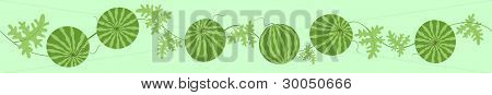 Green Watermelons.