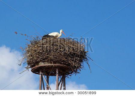A Mother White Stork Bird On A Chimney