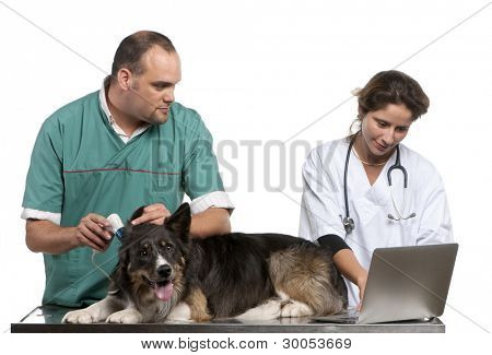 Vets examining a Border Collie with a digital otoscope in front of white background
