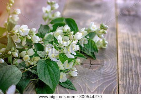 Jasmine Flower , Bloom Jasmine Branches On Wooden Table