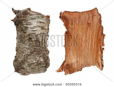 Birch Tree Bark Texture. Isolated On White