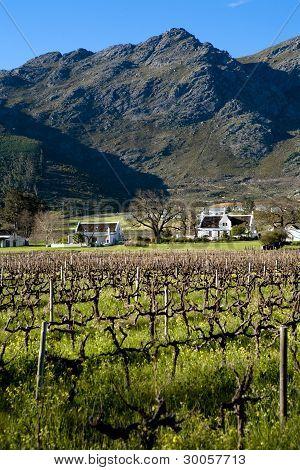 Franschhoek Vineyards