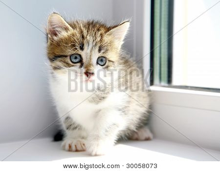 Funny Kitten Ready To Play