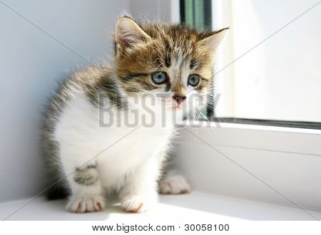 Cute Funny Kitten Ready To Play