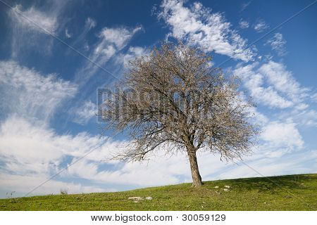Dynamic Clouds And A Tree