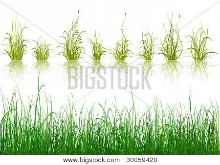 Green Grass - isolated on white background