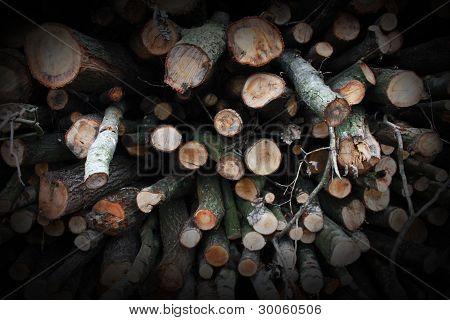 Whole Lotta logs