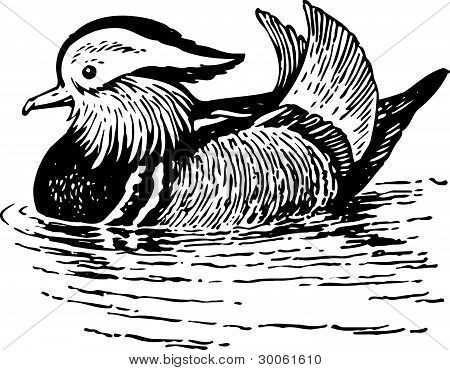 Natatorial bird