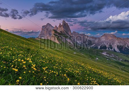 Stunning view of Dolomite mountain and wildflower field in summer at Seceda peak, Italy.