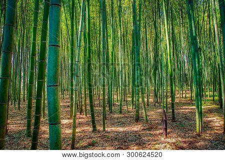 Beautoful Bamboo Forest In Arashiyama, Kyoto, Japan