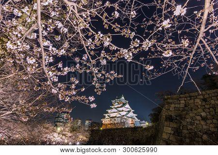 Cherry Blossom And Osaka Castle At Night, Osaka, Japan
