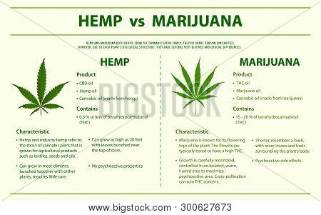 Hemp vs Marijuana horizontal infographic illustration about cannabis as herbal alternative medicine and chemical therapy, healthcare and medical science vector.
