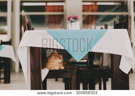 The Red Cat Is Sitting On A Chair In A Street Animal Friendly Cafe And Is Waiting For The Waiter. Sm