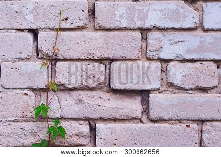 Brick Wall With Young Plant Nearby. Concept Of Leadership, Life And Being Strenght