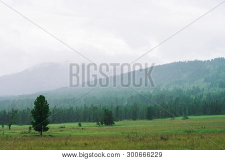 Coniferous Trees Grow In Meadow On Background Of Misty Mountains Under Cloudy Sky. Fog In Highland O