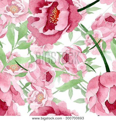 Dark Red Peony Floral Botanical Flowers. Watercolor Background Illustration Set. Seamless Background