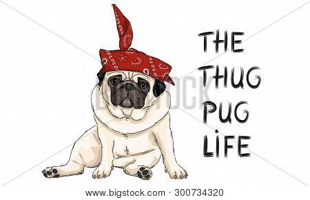 Hand Drawn Vector Illustration Of Thug Pug Puppy Dog, Sitting Down With Red Western Scarf Bandana An