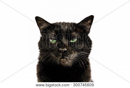 Portrait Of Common Black Cat With Green Eyes On White Background. Horror Atmospheres And Halloween C