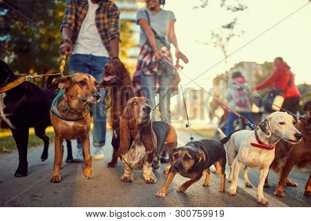 group of dogs in the park walking with professional dog walker