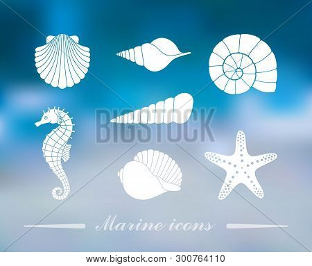 Silhouettes Of Sea Shells, Seahorse And Starfish On The Colorful Background With Defocused Lights