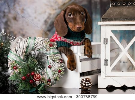 Puppy Christmas dog dachshund in retro decjrations