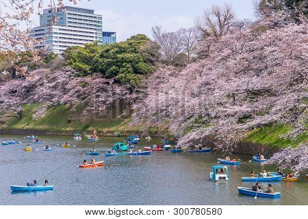 People Are Riding The Paddle Boat In Chidorigafuchi Canal For Viewing Cherry Blossom.