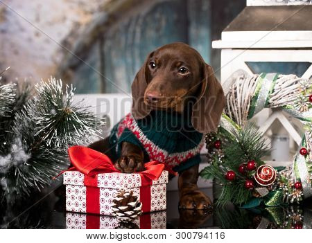Puppy Christmas dog dachshund in retro decorations