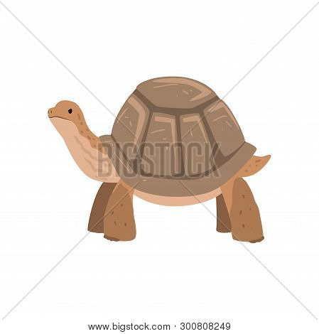 Large Turtle, Tortoise Reptile Animal Vector Illustration